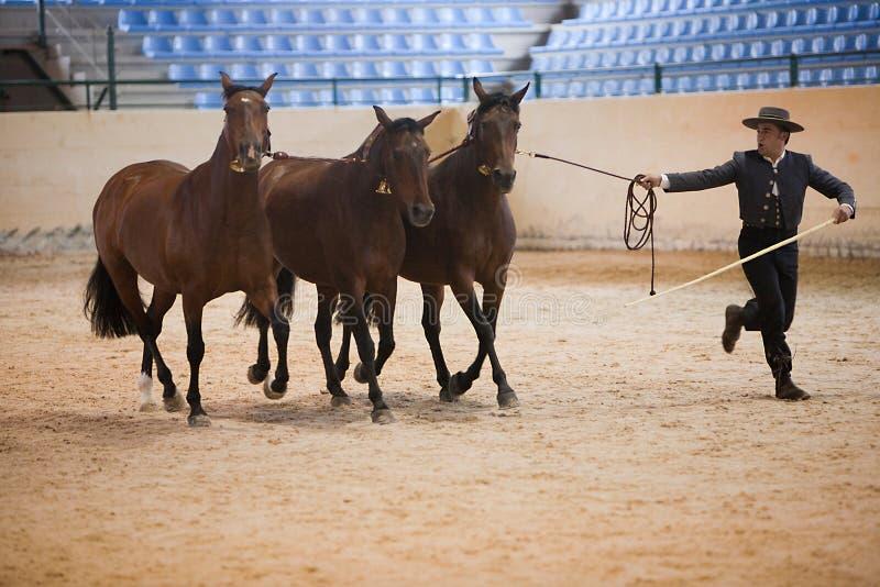 Funcionalidade equestre do teste com os 3 cavalos espanhóis puros, igualmente chamados cobras 3 éguas imagens de stock