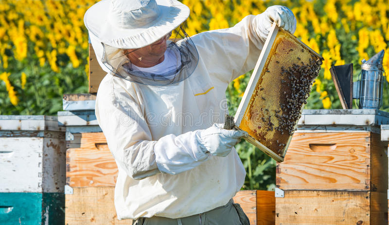 Funcionamento do apicultor imagem de stock