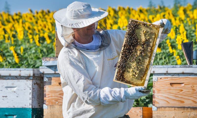Funcionamento do apicultor fotografia de stock