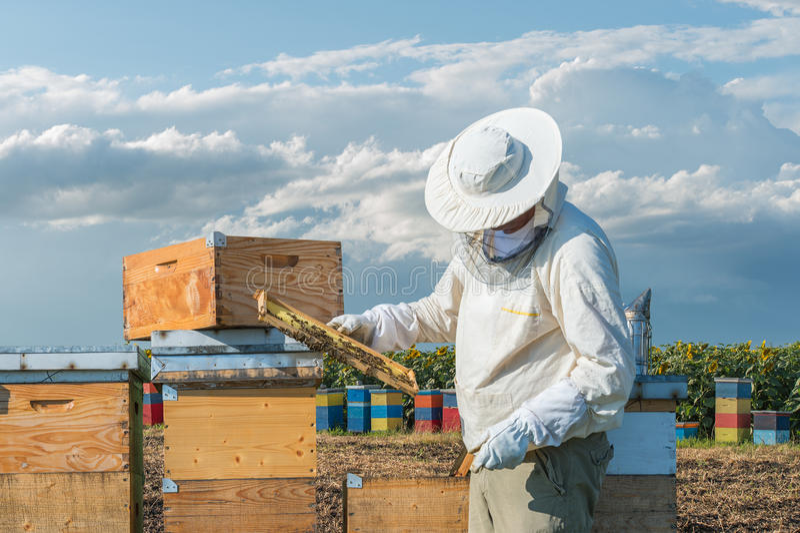 Funcionamento do apicultor foto de stock royalty free