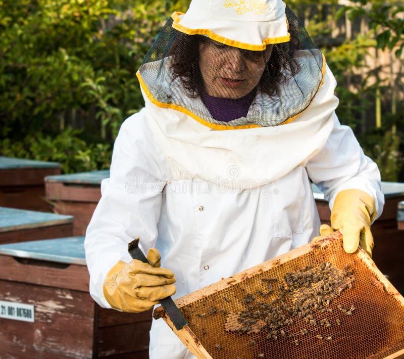 Funcionamento do apicultor foto de stock
