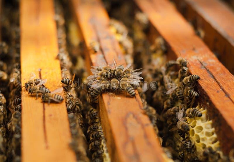 Funcionamiento de la abeja de los insectos imagen de archivo libre de regalías