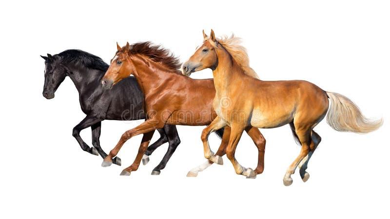 Funcionamiento de tres caballos aislado imagenes de archivo