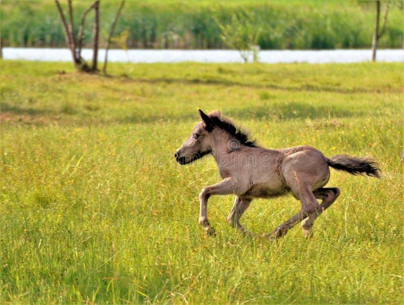 funcionamiento del caballo en el campo foto de archivo libre de regalías