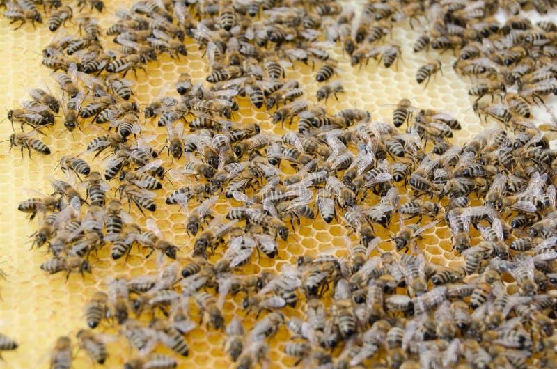 Funcionamiento del enjambre de la abeja foto de archivo libre de regalías