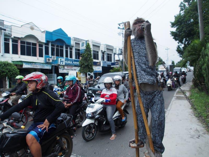Funcionamiento del mono de la calle foto de archivo