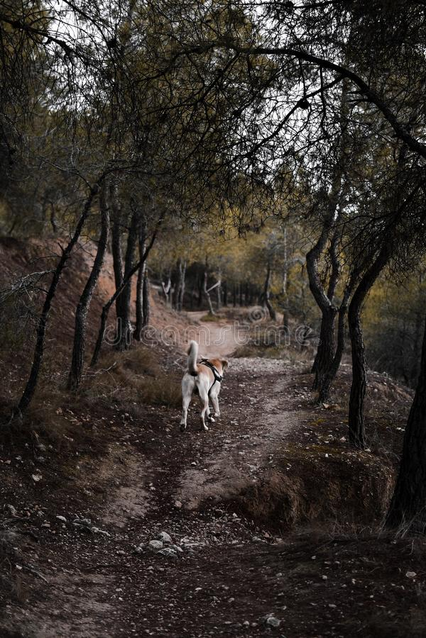Funcionamiento del perro en el bosque fotos de archivo