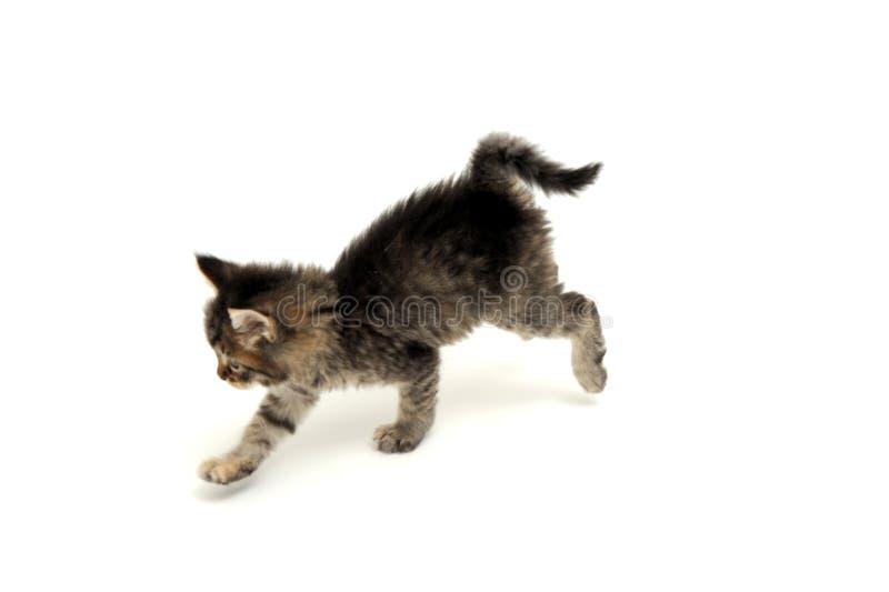 Funcionamiento gris del gatito foto de archivo