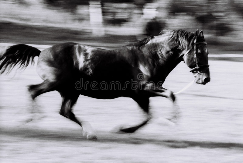 Funcionamiento negro del caballo fotos de archivo