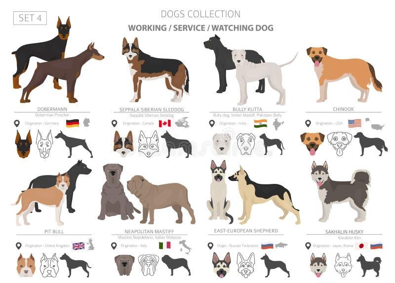 Funcionamiento, servicio y colección de observación de los perros aislados en blanco Estilo plano Diverso color y país de origen stock de ilustración