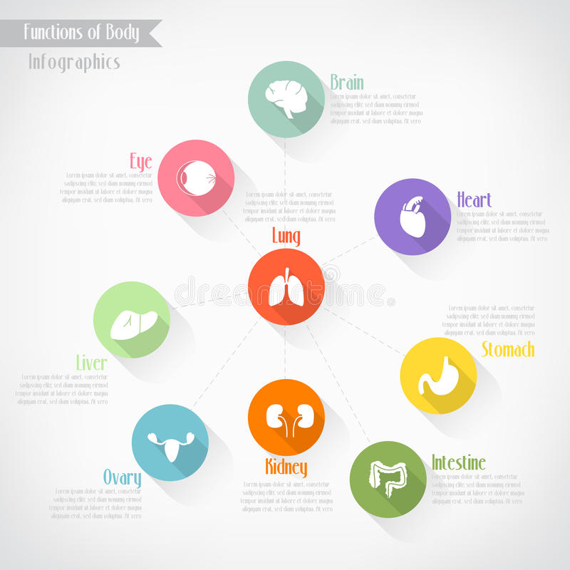 Functions of body infographics. Vector eps10 vector illustration
