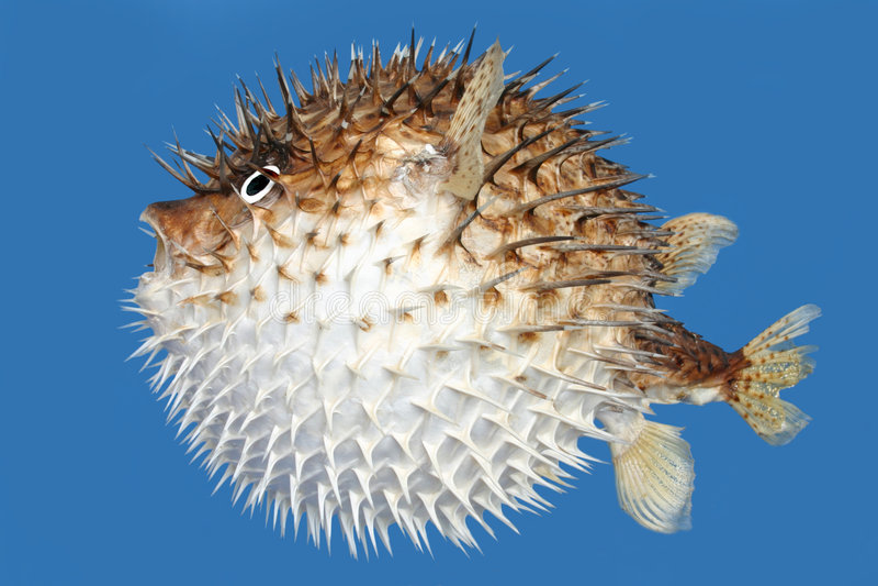 Funda a opinião lateral dos peixes fotografia de stock
