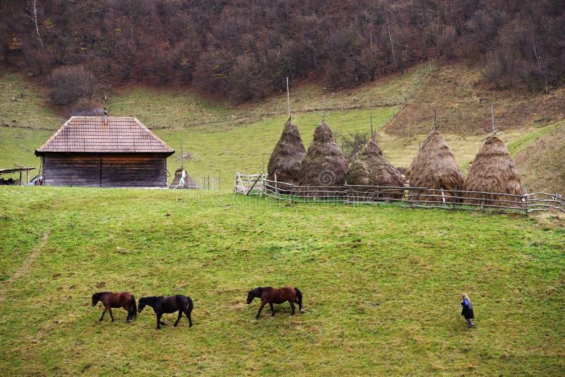 FUNDATURA PONORULUI, ROMÊNIA, O 27 DE OUTUBRO DE 2018 - ocupação tradicional na aldeia da montanha imagens de stock royalty free
