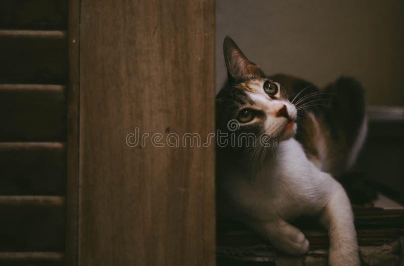 Fundersam katt royaltyfria bilder