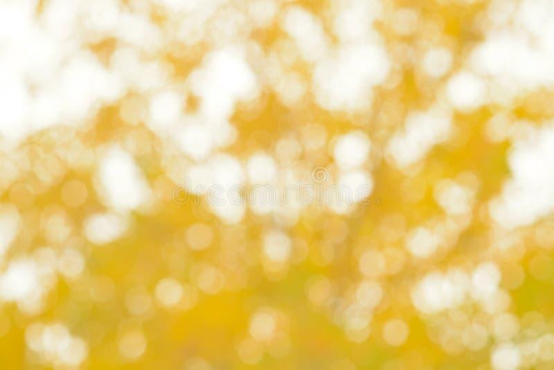 Fundo abstrato borrado das folhas amarelas fotos de stock