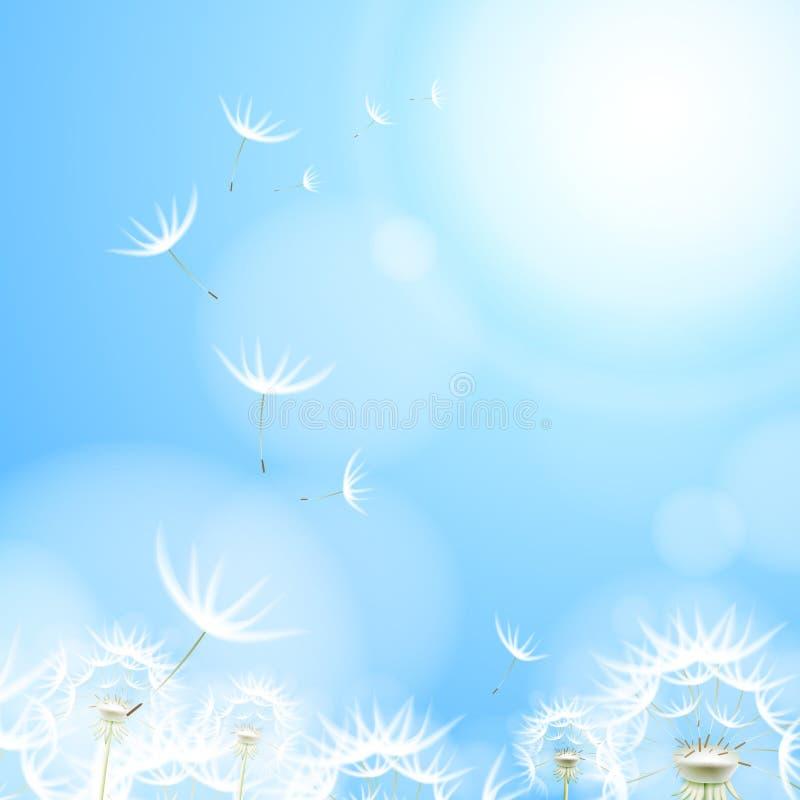 Fundo abstrato com dente-de-leão da flor ilustração do vetor