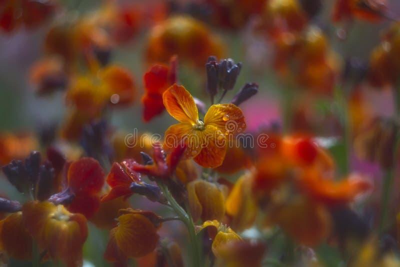Fundo abstrato com flores amarelo-alaranjadas fotografia de stock