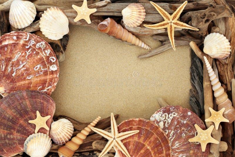 Fundo abstrato da concha do mar e da madeira lançada à costa imagens de stock