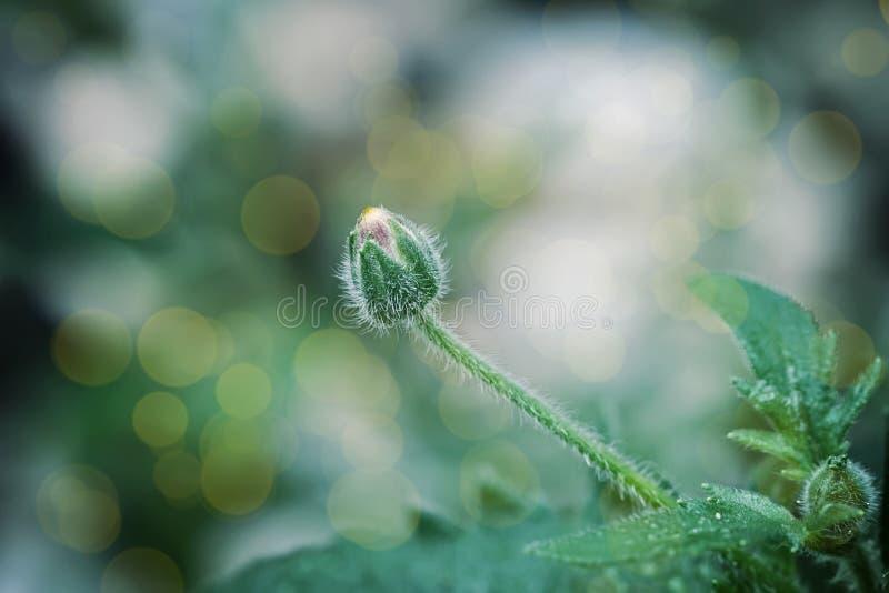 Fundo abstrato da flor fotografia de stock