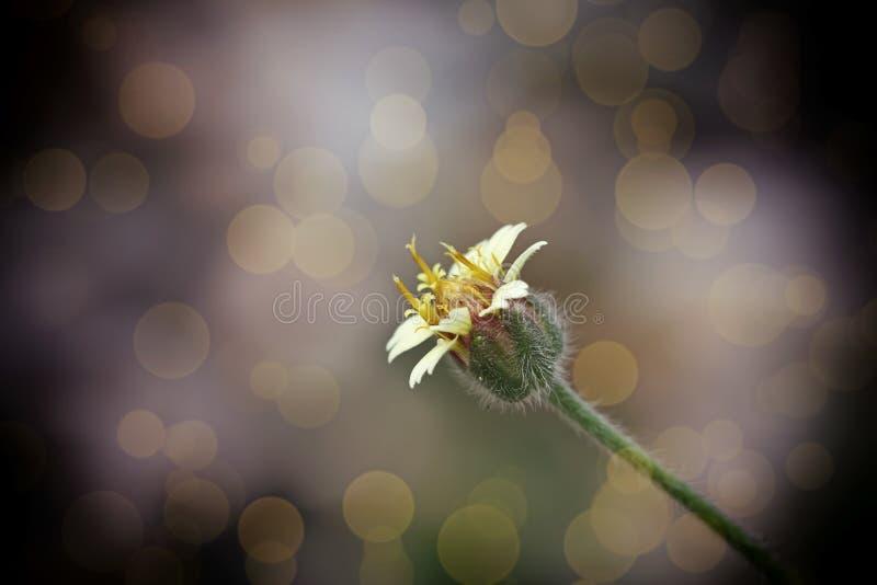 Fundo abstrato da flor no estilo do vintage fotos de stock royalty free