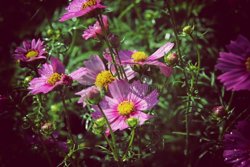 Fundo abstrato da flor no estilo do vintage imagem de stock royalty free