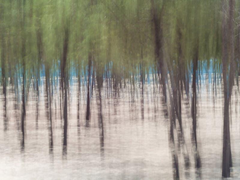 Fundo abstrato da floresta fotos de stock