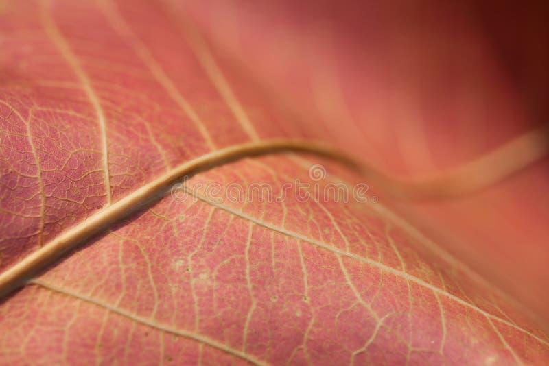 Fundo abstrato da folha do outono foto de stock
