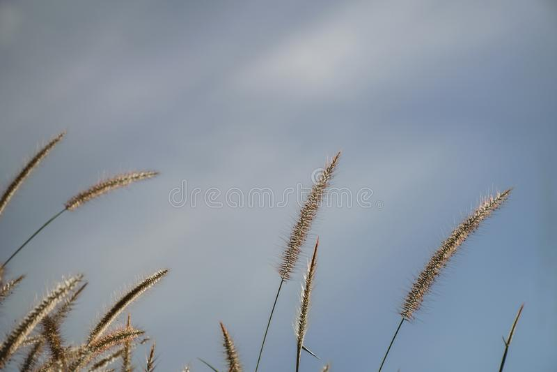 Fundo abstrato da mola ou da natureza do ver?o com grama no prado e o c?u azul na parte traseira imagens de stock royalty free