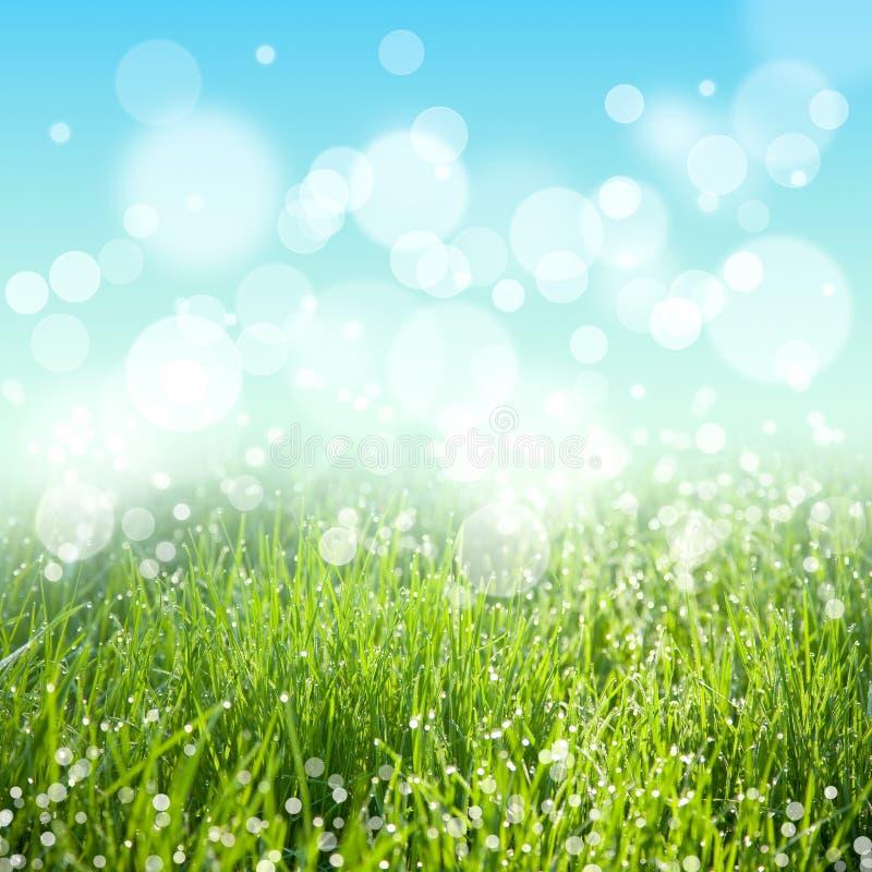 Fundo abstrato da natureza do verão ou da mola imagem de stock