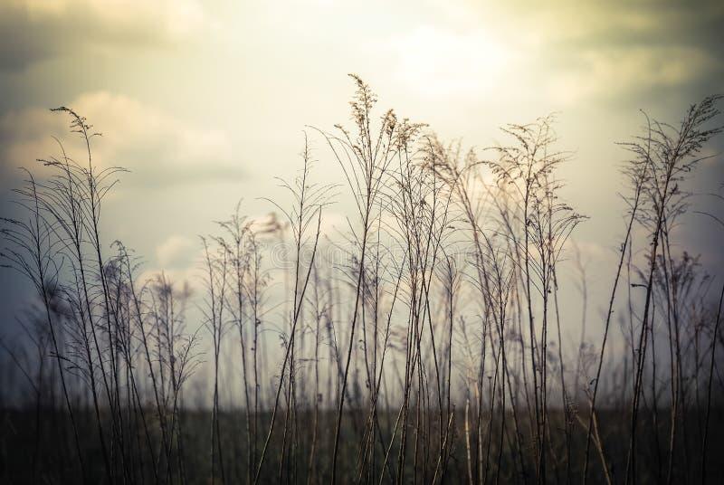 Fundo abstrato da natureza em flores selvagens do estilo do vintage fotografia de stock