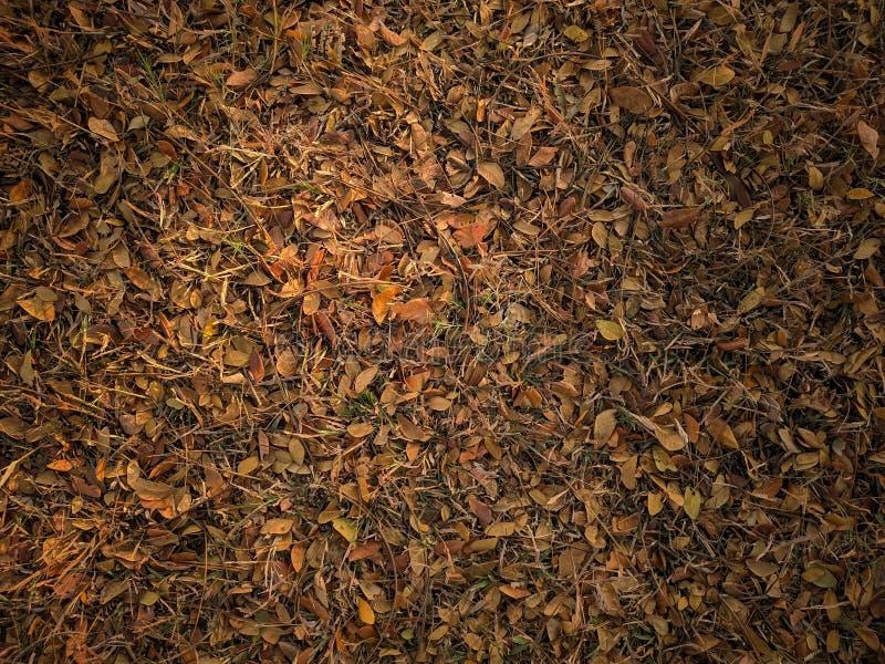 Fundo abstrato da textura das folhas de outono imagens de stock