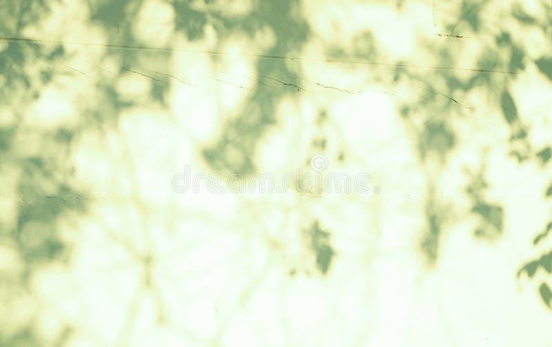 Fundo abstrato do borr?o, sombra verde borrada das folhas de uma ?rvore na parede de superf?cie concreta do cimento da cor branca foto de stock royalty free
