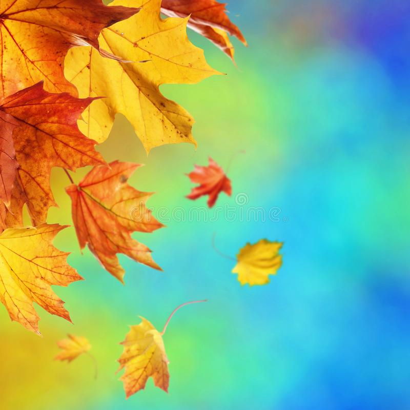 Fundo abstrato do outono imagens de stock