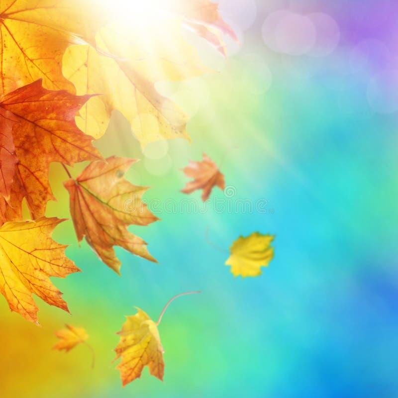 Fundo abstrato do outono fotos de stock