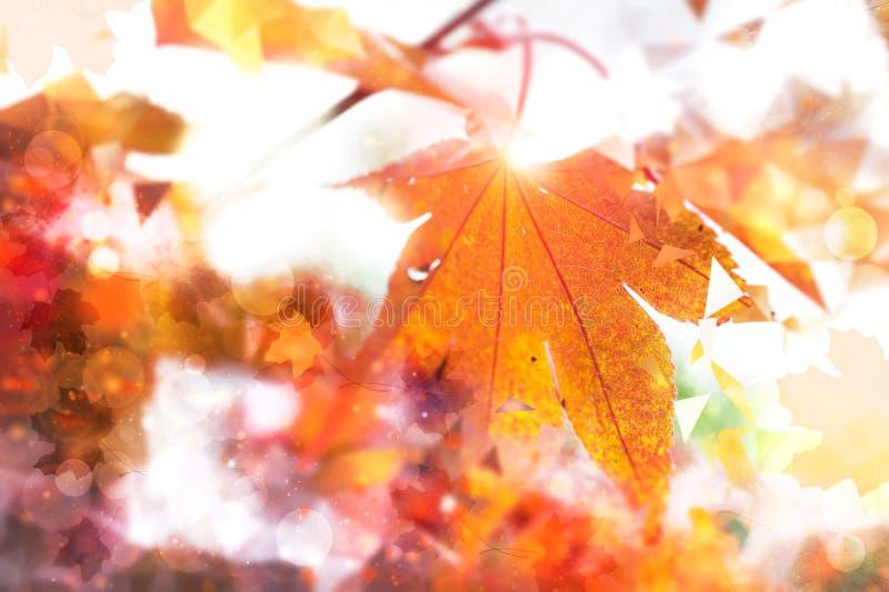 Fundo abstrato do outono com a folha dourada do marple, espaço do texto imagem de stock