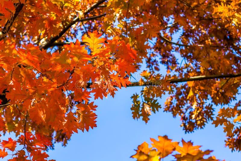 Fundo abstrato do outono, folhas alaranjadas velhas, folha seca da árvore, foco macio, estação outonal, mudança da natureza, luz  fotos de stock royalty free