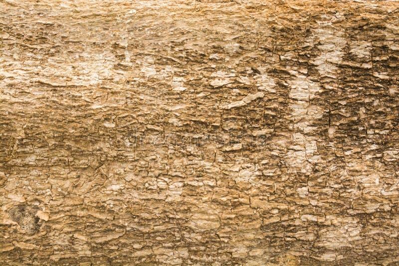 Fundo abstrato do teste padrão da textura da casca de madeira de Brown imagens de stock royalty free