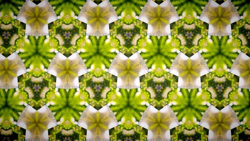 Fundo abstrato do teste padrão de flor do verde amarelo fotos de stock