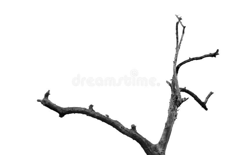 Fundo abstrato dos ramos de árvore foto de stock royalty free