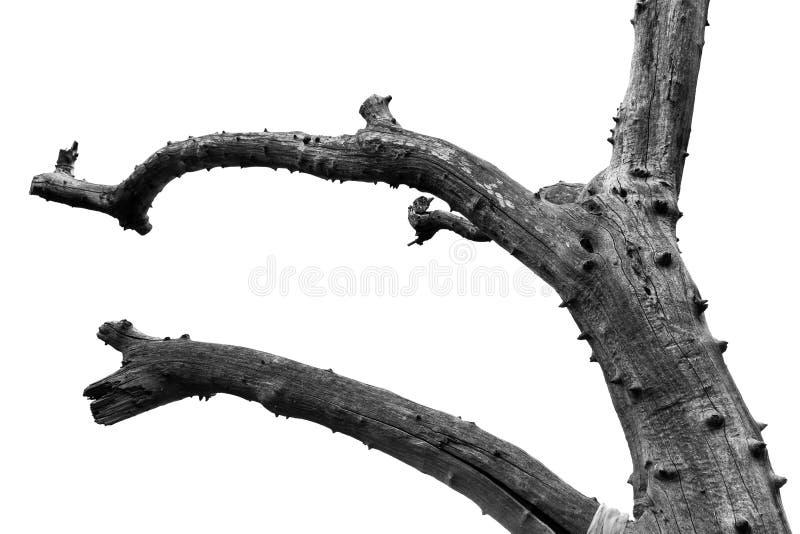 Fundo abstrato dos ramos de árvore imagens de stock royalty free