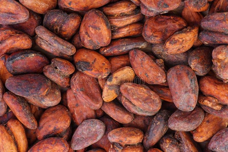 Fundo abstrato: Encerramento de feijão-Cacao foto de stock royalty free