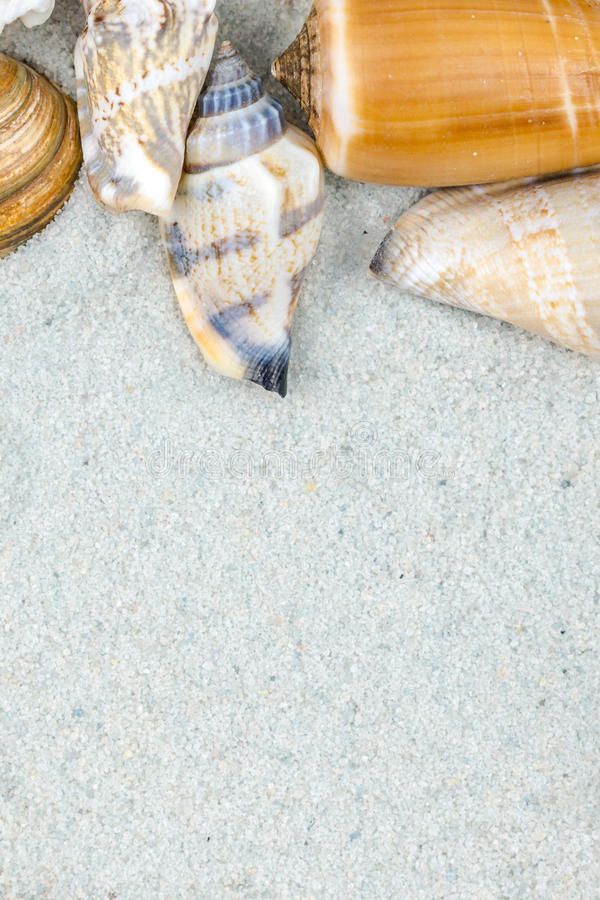 Fundo abstrato feito dos shell na areia imagem de stock royalty free