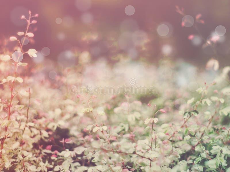 Fundo abstrato floral imagem de stock