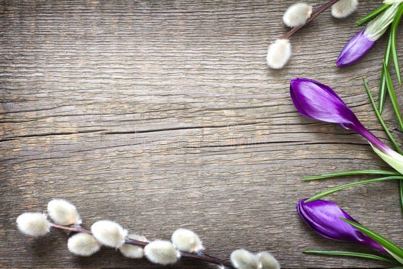 Fundo abstrato floral de easter da mola com o salgueiro do açafrão e de bichano imagem de stock royalty free