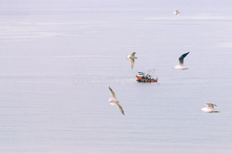 Fundo abstrato, mínimo, surreal - o bote navega quietamente no meio do mar, nas gaivotas do voo do primeiro plano foto de stock