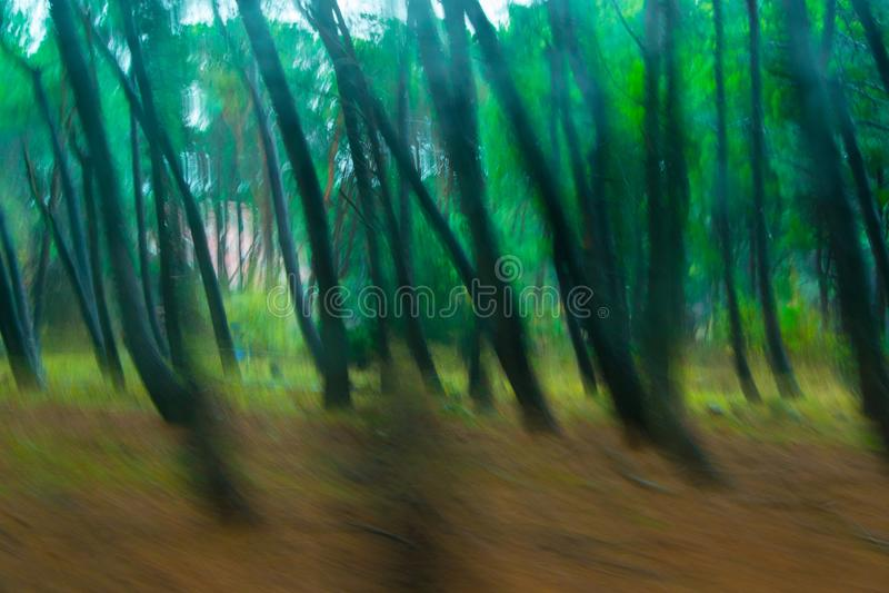 Fundo abstrato obscuro da floresta surreal imagem de stock