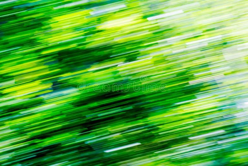 Fundo abstrato obscuro da floresta verde do verão fotografia de stock royalty free