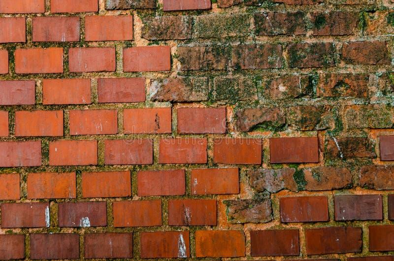 Fundo abstrato - uma parede velha do tijolo cerâmico vermelho danificado inundando e coberto com o musgo e o molde fotografia de stock