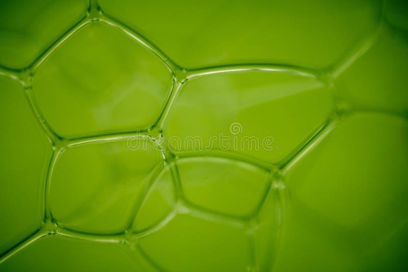 Fundo abstrato verde Bionic. imagens de stock