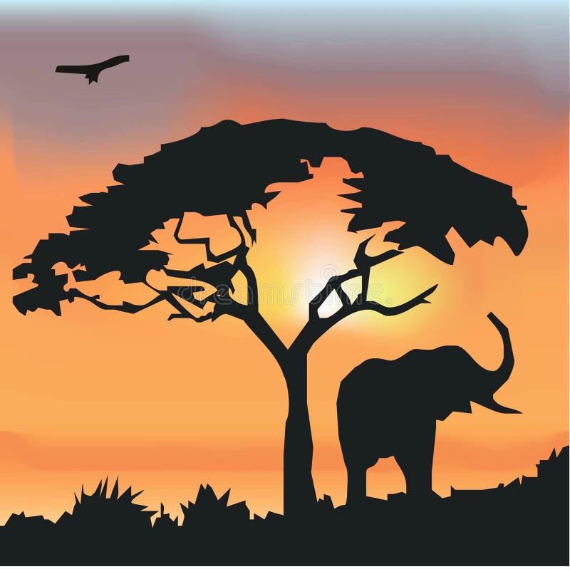 Fundo africano dos animais selvagens fotos de stock royalty free